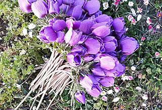 les-fleurs-des-vignes-bkg-vignobles-degas