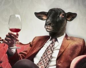 mouton noir