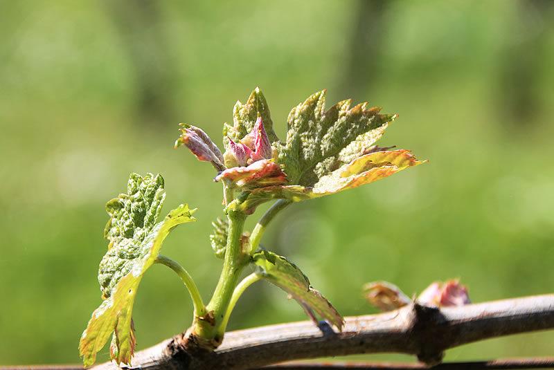 Vignobles degas, 8ème génération !